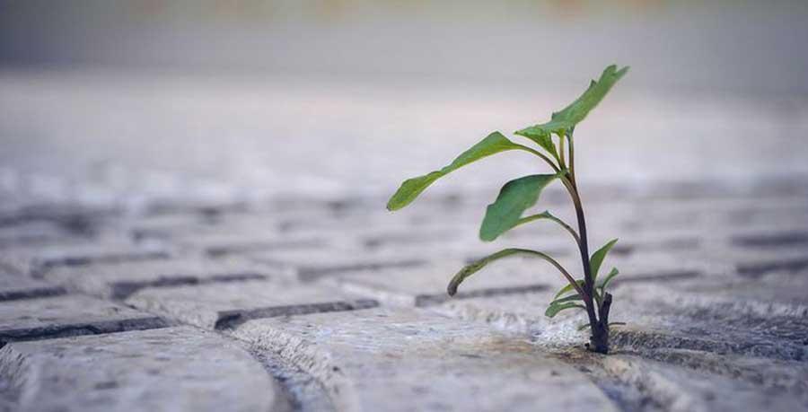 environmentally friendly concrete
